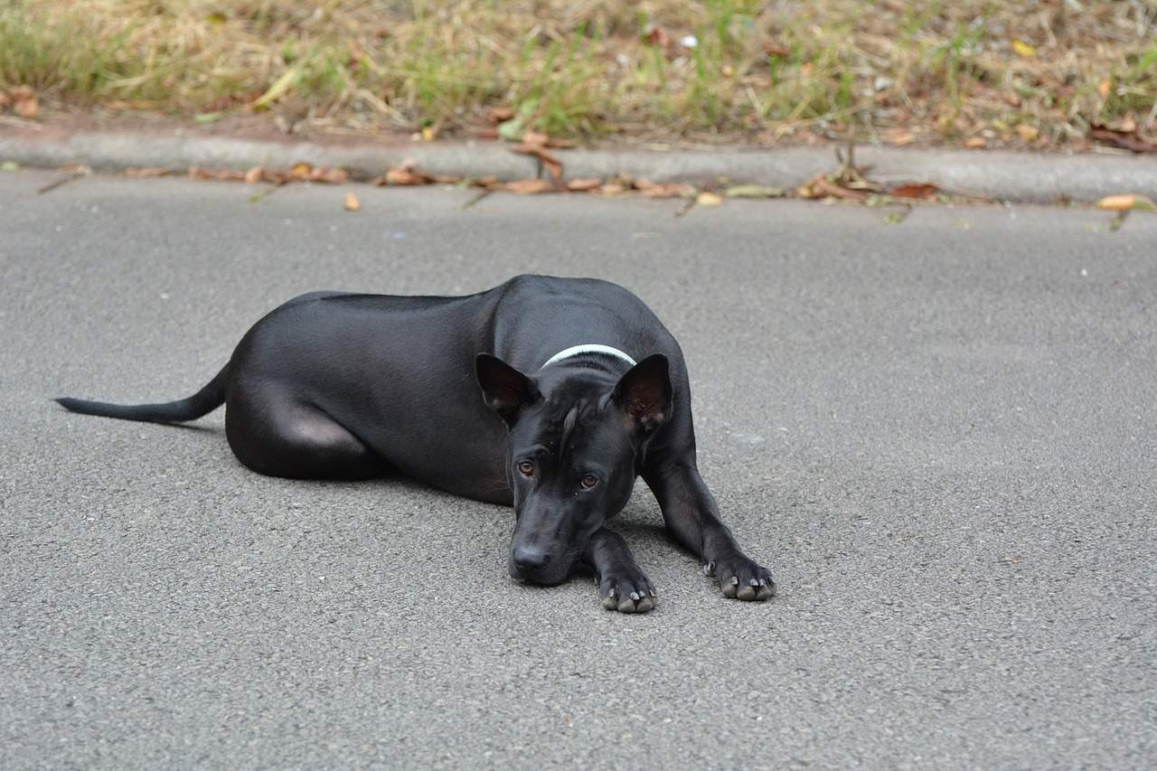 Dog Behaviour Problems and the Dog-Owner relationship