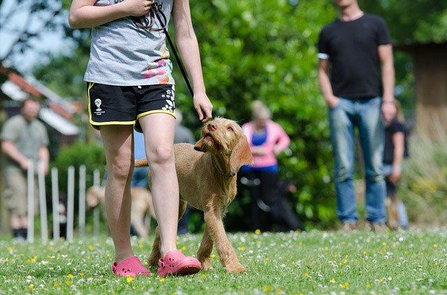 Rewards In Dog Training