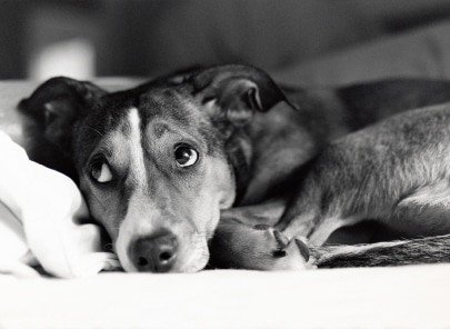 Dog Behaviour Problems and Emotions