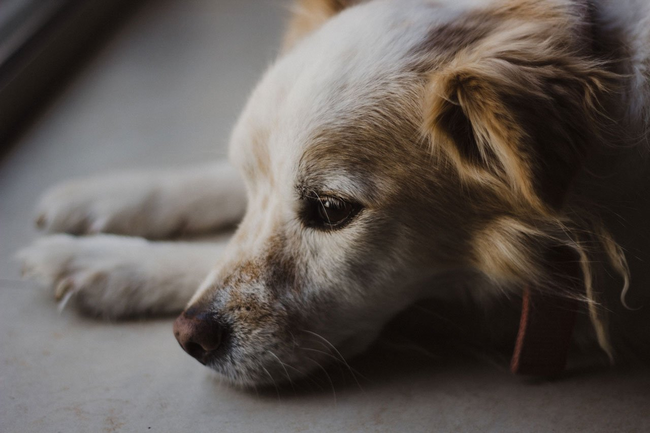 Dog Behaviour Problems & Emotions