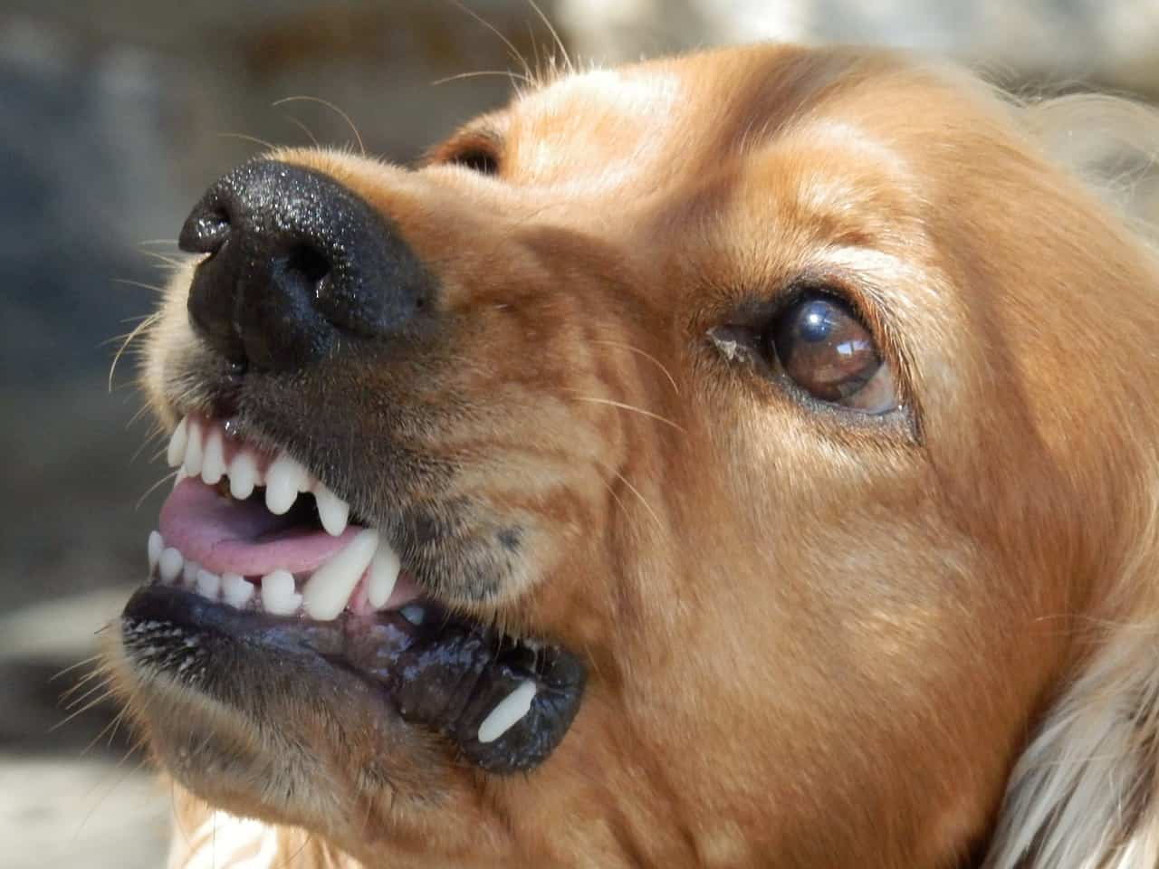 Canine Aggression and Predation