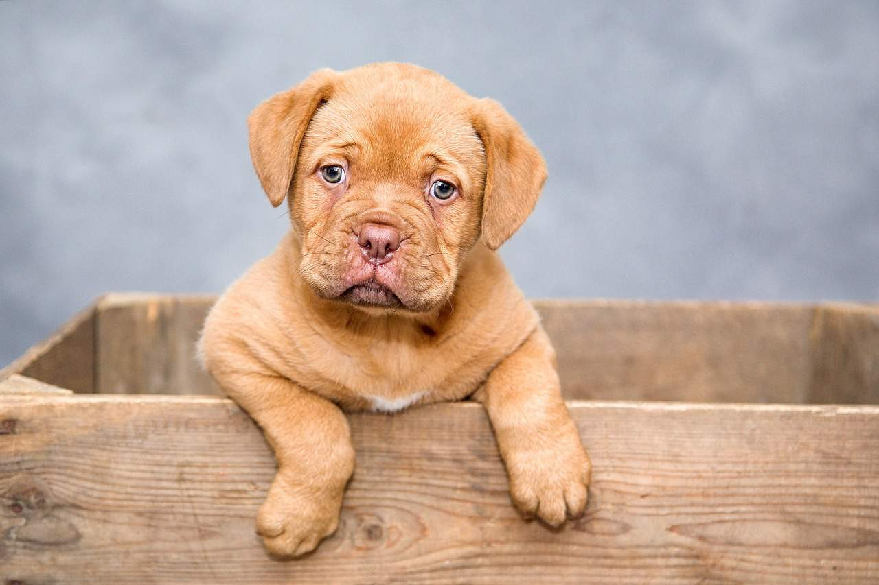 Getting a Puppy? What To Ask The Breeder