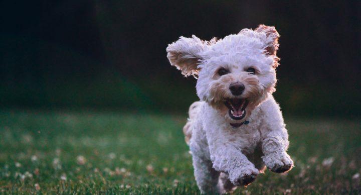 Puppy Training & Behaviour Problems